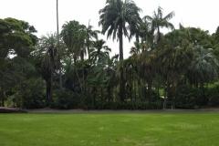 Der Palmengarten im botanischen Garten