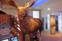 Ausstellung im Besucherzentrum