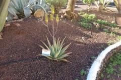 Im Kaktusgarten