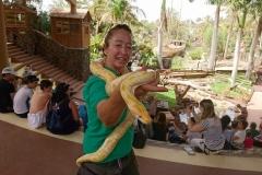 Eine etwas größere Python (Albino)