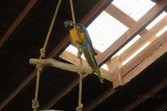 Ein Ara bei Parrot Live