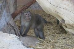 Einer der geretteten Affen