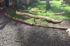 Zwei Pythons