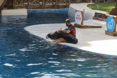 Kuscheln mit Seelöwen