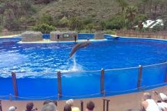 Delfinshow im Palmitos Park