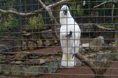 Ein sprechender Kakadu