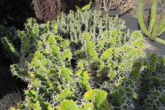 Interessante Form eines Kaktus