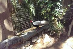 Im Vogelkäfig