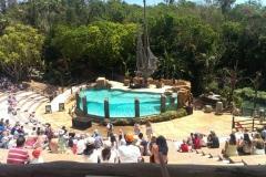 Das Amphitheater der Seelöwenshow